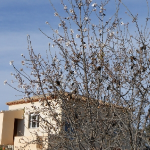 Property for Sale in Caudete Castilla Lan Mancha